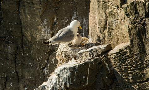 il gabbiano uccello uccello di bambino gabbiano fotografia stock
