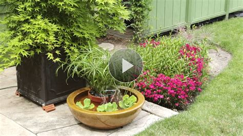 container water garden supplies create a container water feature
