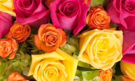 colore dei fiori significato linguaggio dei fiori i significati dei colori delle