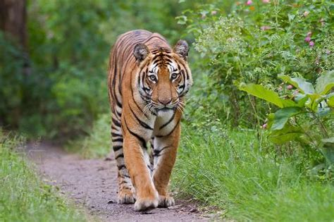 Animal Indian 03 top 15 endangered animals species in india styles at