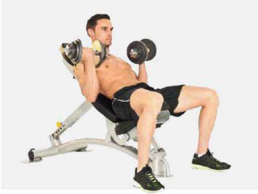 incline bench dumbbell curl incline bench dumbbell curl 28 images the 30 most powerful arm exercises for