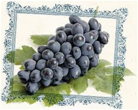 are dogs allergic to grapes grapes causing in dogs signs and solutions veterinary secrets with dr