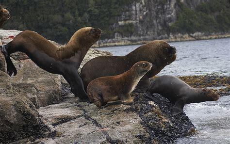 fotos animales zona sur de chile flora y fauna de la patagonia chilena reforestemos patagonia