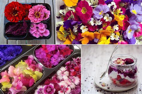 fiori eduli fiori eduli commestibili erbe aromatiche fattoria delle erbe
