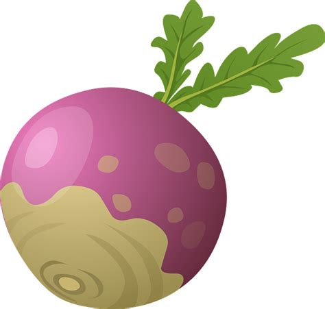 beet clipart free vector graphic beet root vegetable healthy free