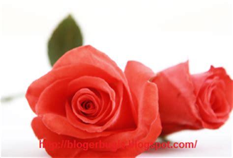 Bunga Mawar Mute Ukuran Sedang mengenal jenis jenis bunga berdasarkan fungsinya
