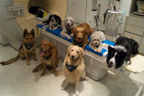 can dogs tell when you are dogs process language like us and can tell when we praise them new scientist