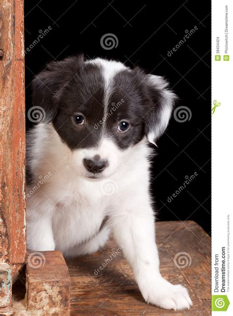 puppy in the window puppy in window stock images image 28434424