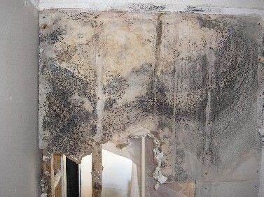 Prescription To Detox From Mold by 54 Best Images About Black Mold On Health