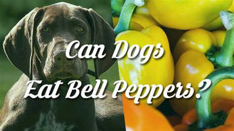bell peppers for dogs can dogs drink coffee pet consider