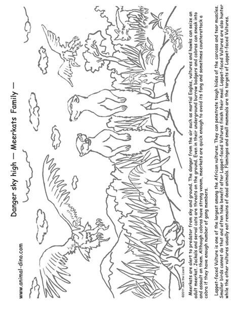 Photo Of Meerkat Coloring Pages Meerkat Colouring Pages