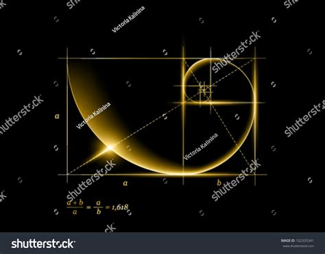 Golden Section Spiral by Golden Section Ratio Proportion Golden Stock Vector