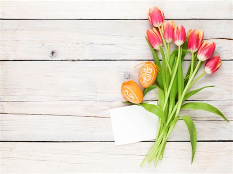 tulip card template images easter eggs tulips flowers template greeting card