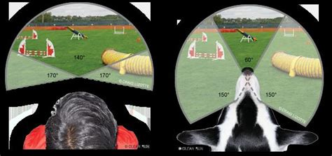 how do they seeing eye dogs plexidor pet doors dogs are not color blind they just see the world differently from us
