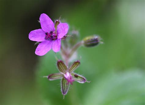 picolo fiore piccolo grande fiore juzaphoto