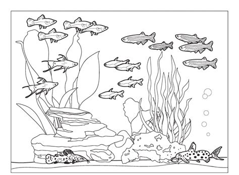 coloring pages of freshwater fish fish community in aquarium coloring pages