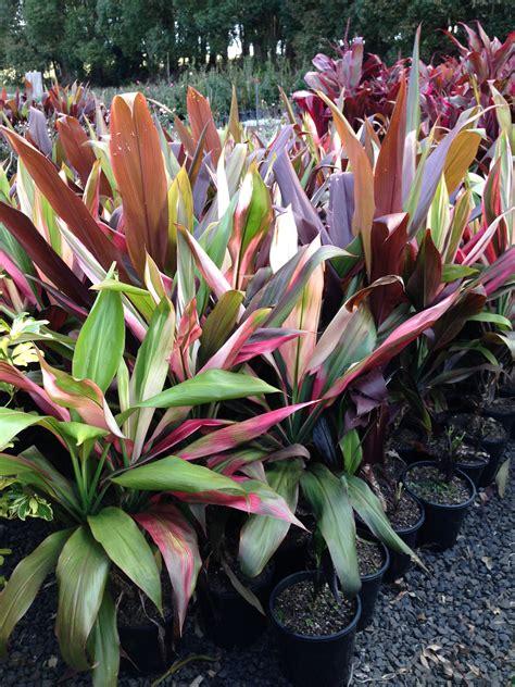 Plant Giveaways - alpine nurseries plant giveaway ballinamalibuclub org