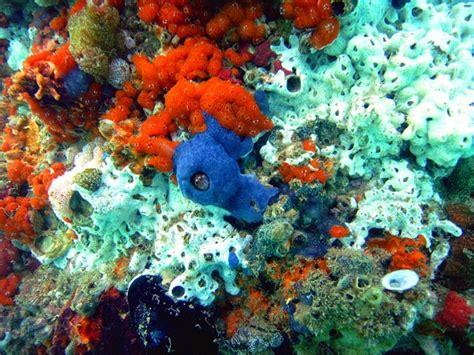 imagenes de animales poriferos animales vertebrados e invertebrados por 237 feros