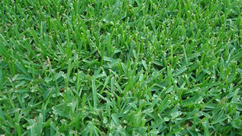 l shade fair inc orlando fl triangle turf inc st augustine turf grass raleigh