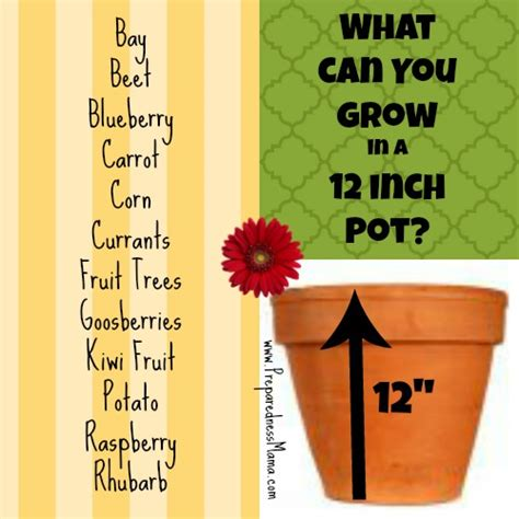 "What Can You Grow in a 12"" Pot?   Planting Depth Revealed"