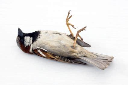 A Non Thanksgiving Thanksgiving Post A Reasonable Faith Dead Sparrow