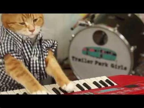 Keyboard Cat Meme - keyboard cat know your meme