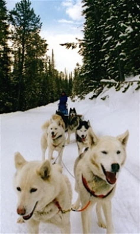 sledding breckenridge breckenridge sledding sled tours in breckenridge colorado