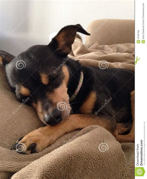 small black and brown black and brown dogs www imgkid the image kid has it