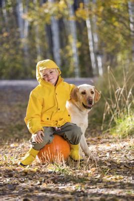 dogs eat pumpkin can dogs eat pumpkin puree care the daily puppy