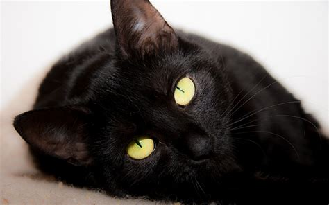 names for a black cat names 250 cat names you will by the happy cat site