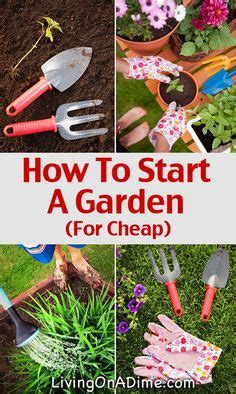 gardening on pinterest flowers cacti and other growing