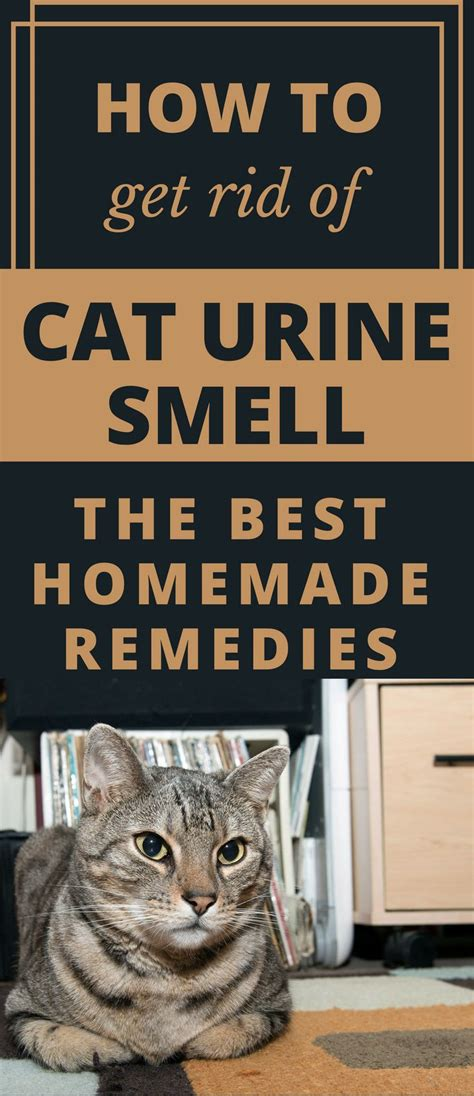 how to get smell out of couch 25 best ideas about cat room on pinterest cat stuff