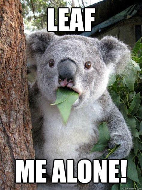 Koala Meme - leaf me alone koala funny meme animals with attitude
