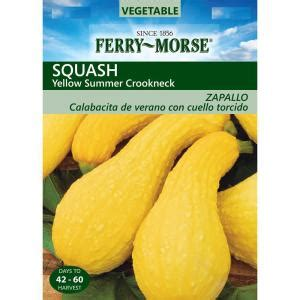 ferry morse squash yellow summer crookneck seed