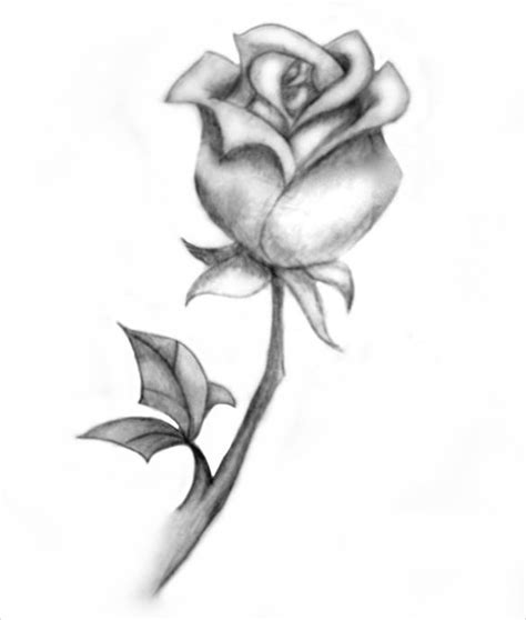 sket tattoo mawar image gallery rose drawings
