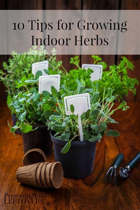 tips  growing indoor herbs