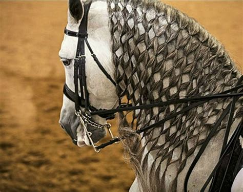 fjord mane designs 17 best images about horse details mane on pinterest