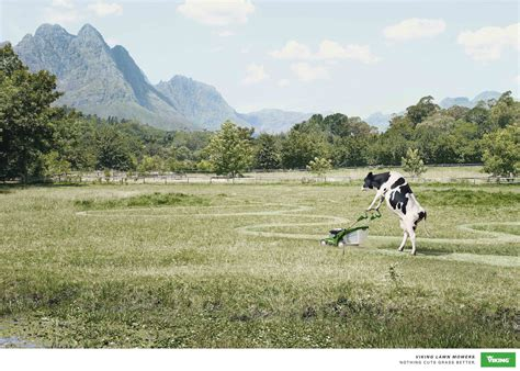 how to a working cow 40 creative and advertisements using animals
