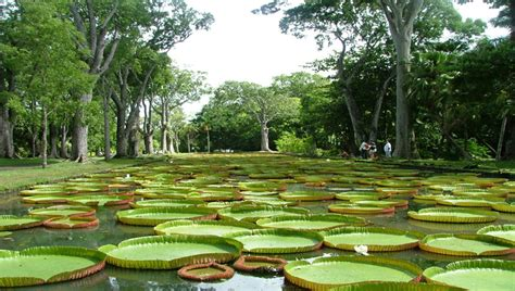 Botanical Garden Mauritius Also Known As The Royal Botanic Gardens Of Plemousses And Later Sir Seewoosagur Ramgoolam