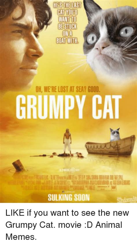 New Cat Memes - 25 best memes about good grumpy cat good grumpy cat memes