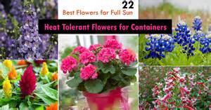 best flowers for small pots 22 best flowers for full sun heat tolerant flowers for