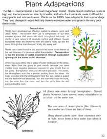 what are some plant adaptations in the tropical rainforest image gallery leaf adaptations