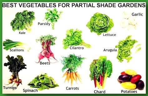 vegetables that grow in shade what to plant in a partial shade garden