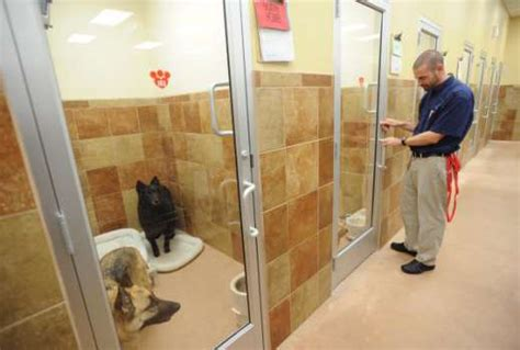 petsmart hotel a pet s home away from home houston chronicle