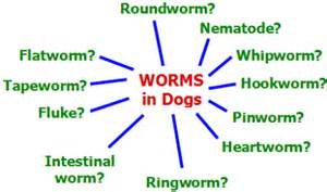 So let s quickly shed some light on the types of canine worms again