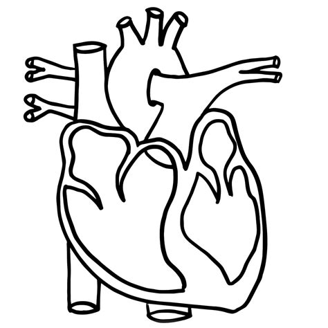 top anatomy coloring book black and white diagram unlabeled clipart best