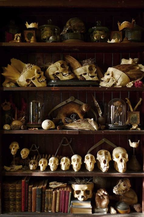 Create Your Own Cabinet Of Curiosities 1 Pyewackett