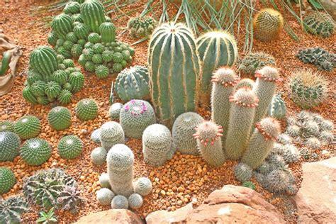 piante grasse in giardino piante grasse come curarle in modo facile e naturale