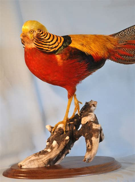 Home Decor Wood Wildfowl Artistry Red Golden Pheasant Rooster