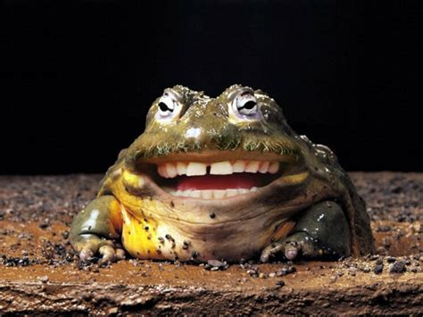 Toad funniest new images pictures funny and cute animals
